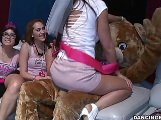 Bachelorette Party Goes Unreasoned Be required of an obstacle Bear! (db14088)